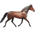 French Trotter ##STADE## - coat 79