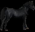 Arabian Horse ##STADE## - coat 51
