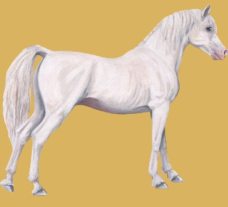 Take in a arabian horse breed horse