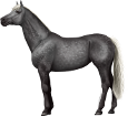 Holsteiner ##STADE## - coat 71