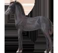 Friesian Horse ##STADE## - coat 51