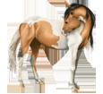 American Paint Horse ##STADE## - coat 1000000061