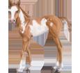American Paint Horse ##STADE## - coat 5