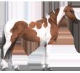 American Paint Horse ##STADE## - coat 80