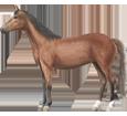 Hanoverian Horse ##STADE## - coat 79