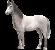 Andalusian Horse ##STADE## - coat 79