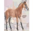 Quarter Horse ##STADE## - coat 77