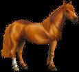Chilean horse ##STADE## - coat 77