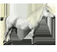 Shetland Pony ##STADE## - coat 52