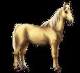 Boer Pony ##STADE## - coat 1607