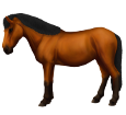 Thai pony ##STADE## - coat 79