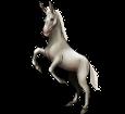 Donkey ##STADE## - coat 1000000167