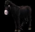 Grand noir du Berry Donkey ##STADE## - coat 1000000156