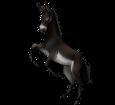 Grand noir du Berry Donkey ##STADE## - coat 1000000165